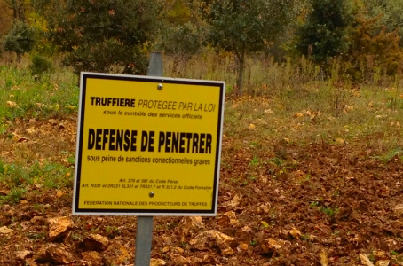 Trail Running Holidays in Dordogne, France - Truffle orchards